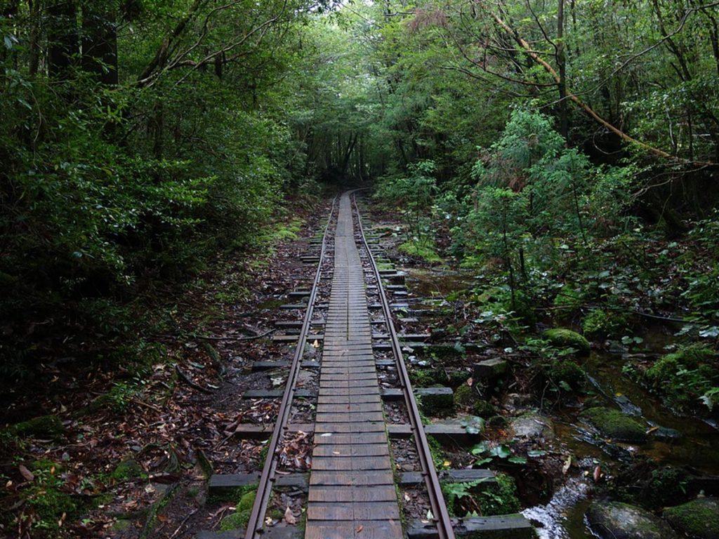 Yakushima Island Jomonsugi Trail
