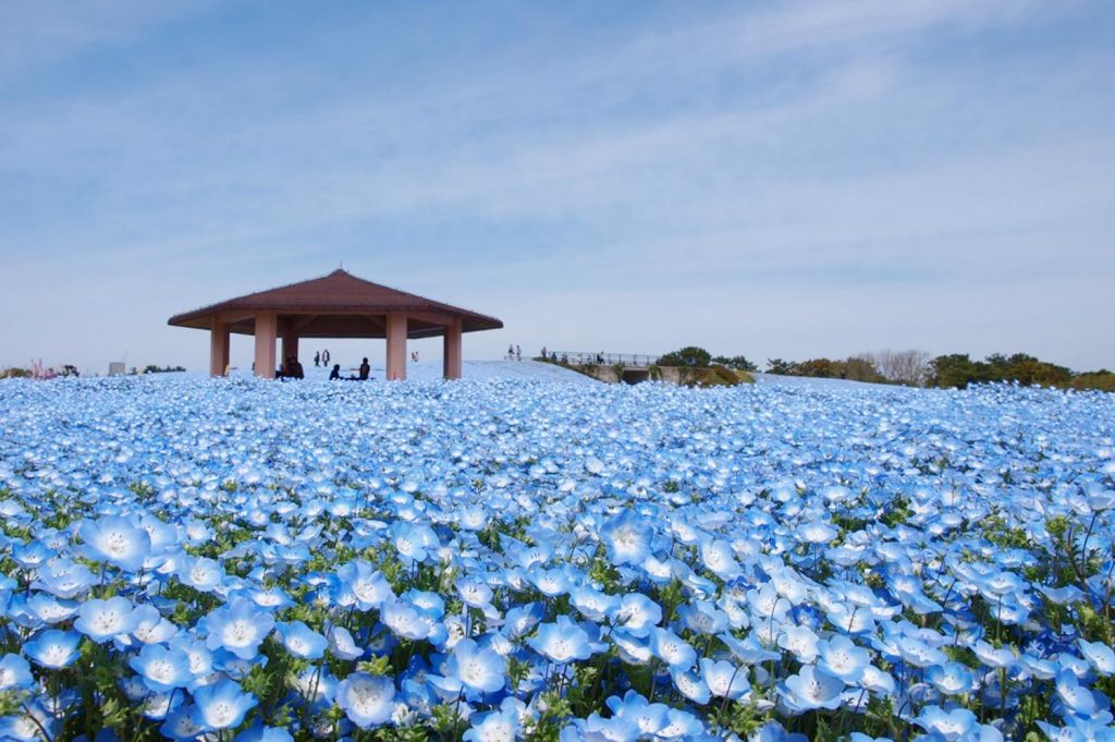 Things to do in Fukuoka Uminonakamichi Seaside Park