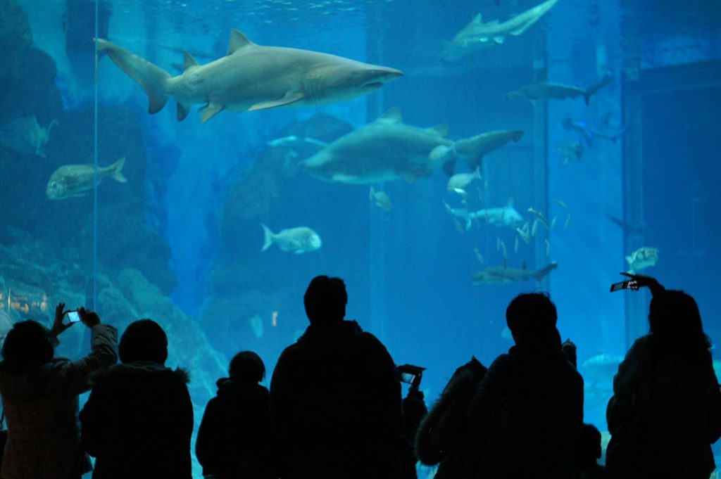 Things to do in Fukuoka Marine World Uminonakamichi