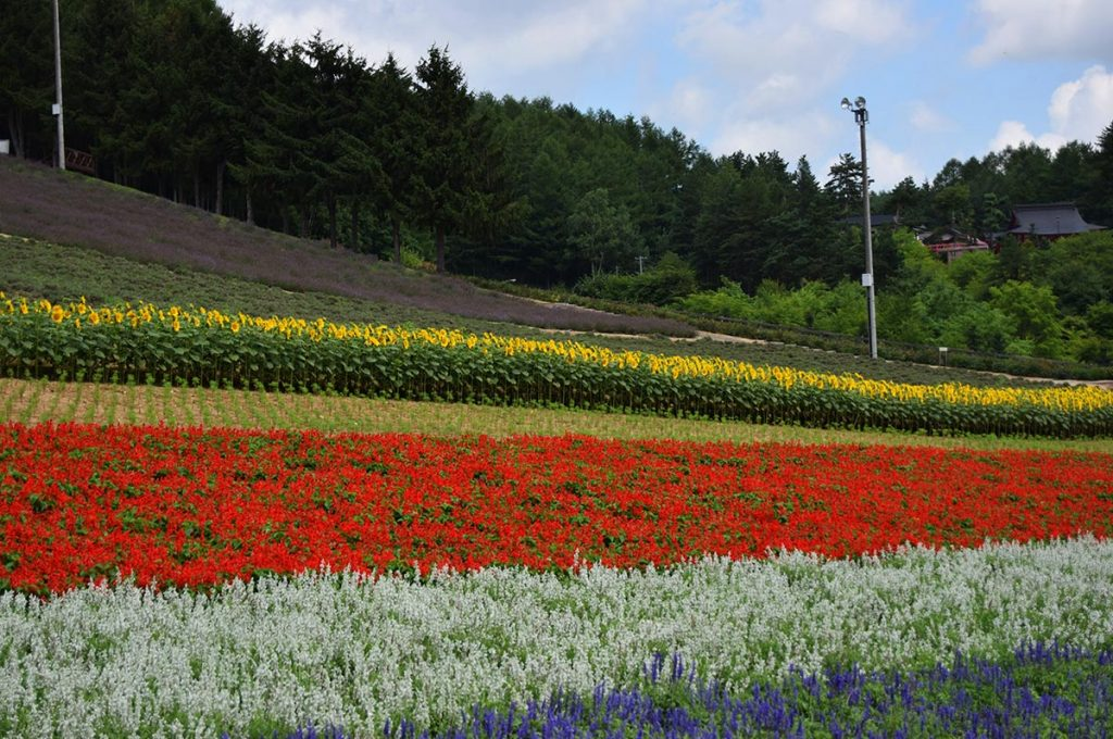 Things to do in Sapporo Furano