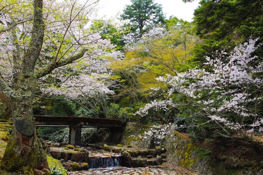 Miyajima Island Omoto Park