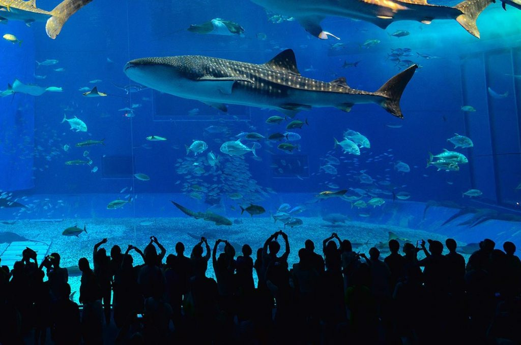 Naha Okinawa Churaumi Aquarium