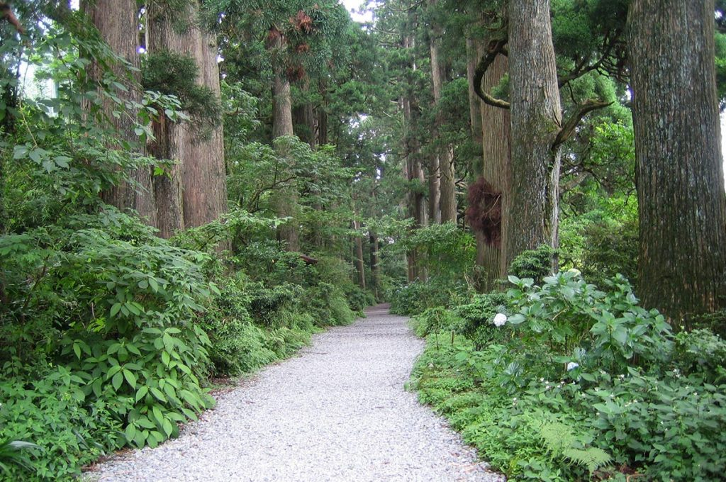 Things to do in Hakone Ancient Cedar Avenue