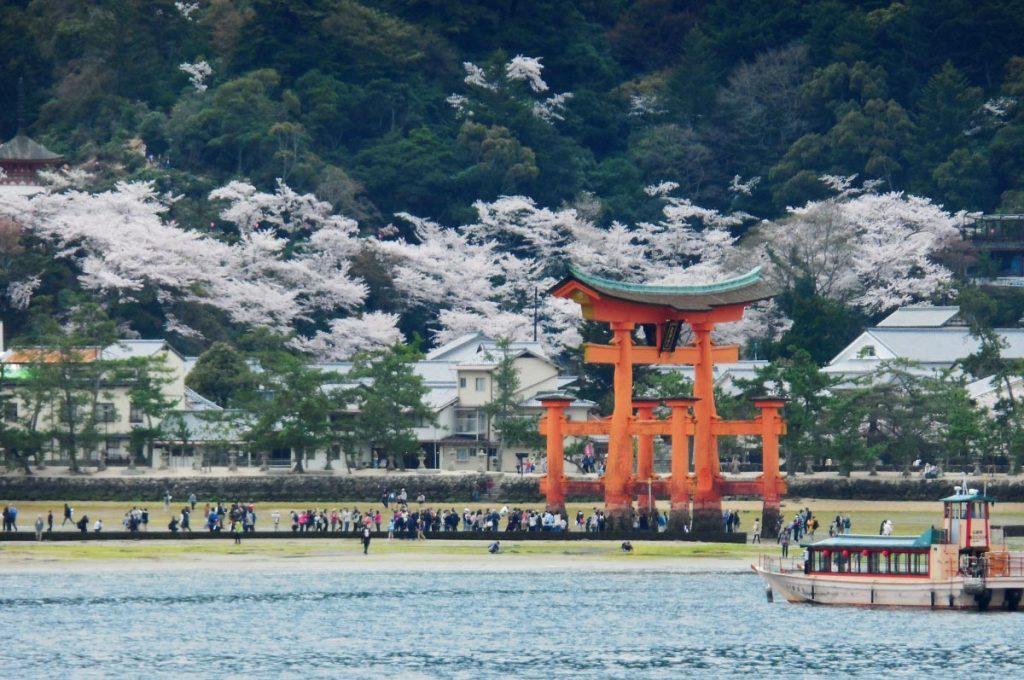 Cherry Blossom Festival Japan Miyajima