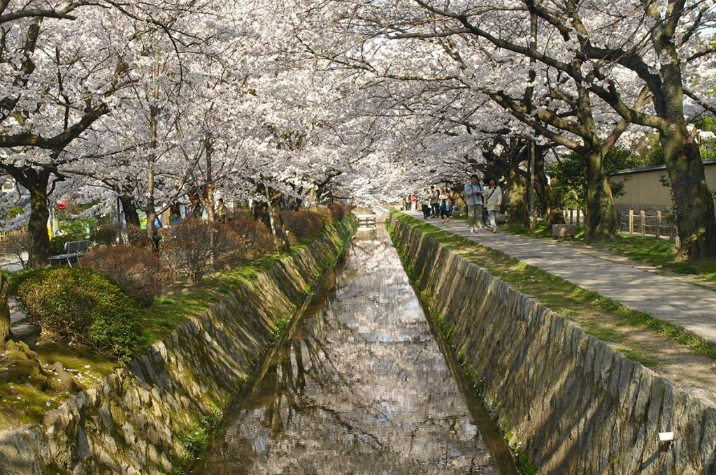 Cherry Blossom Festival Japan Philosopher's Path