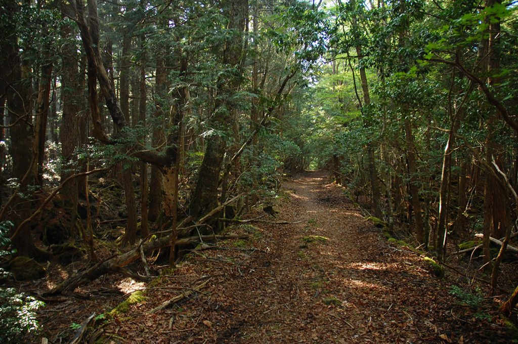 Haunted Forest in Japan Path