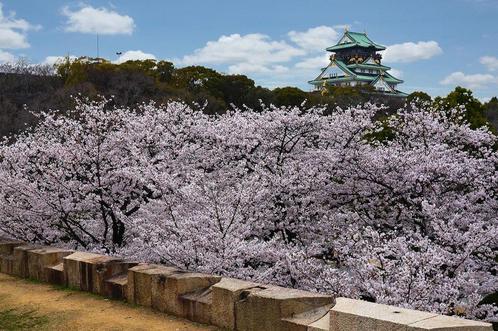 Cherry Blossom Festival Japan Osaka Castle Park