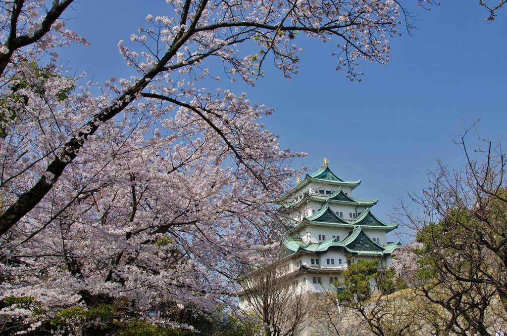 Cherry Blossom Festival Japan Nagoya Castle