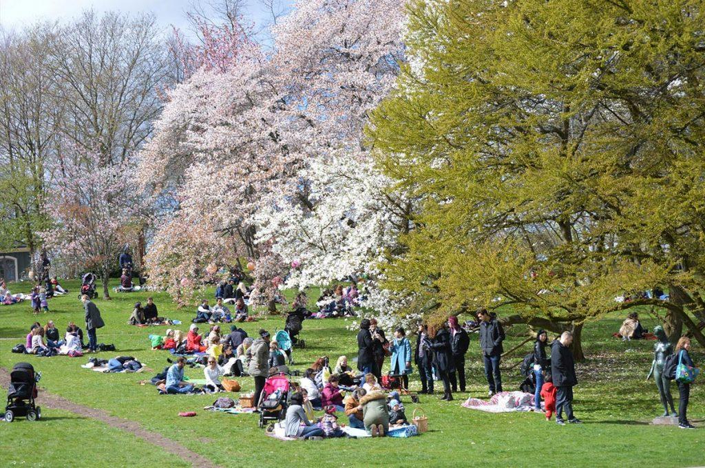 Cherry Blossom Festival Japan Hanami Picnic