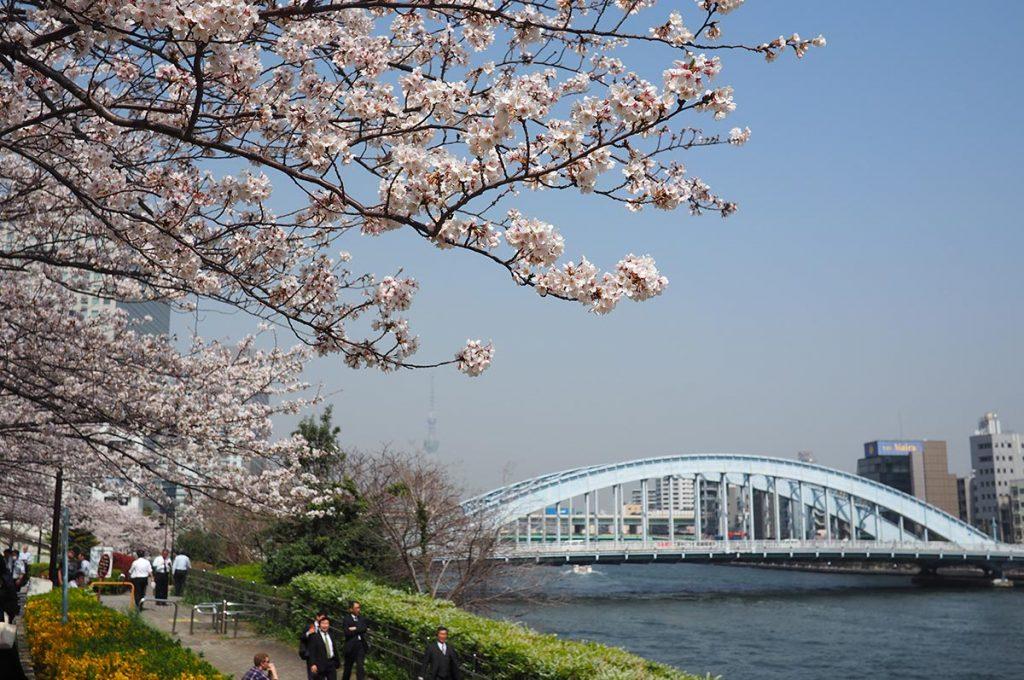 Cherry Blossom Festival Japan Sumida Park