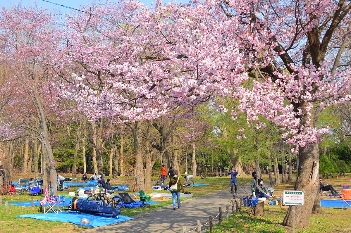 Cherry Blossom festivals Japan – FREE EBOOK