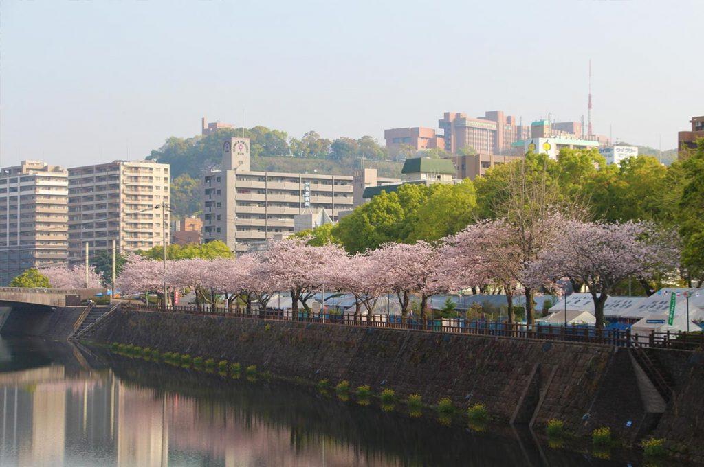 Cherry Blossom Festival Japan Kagoshima