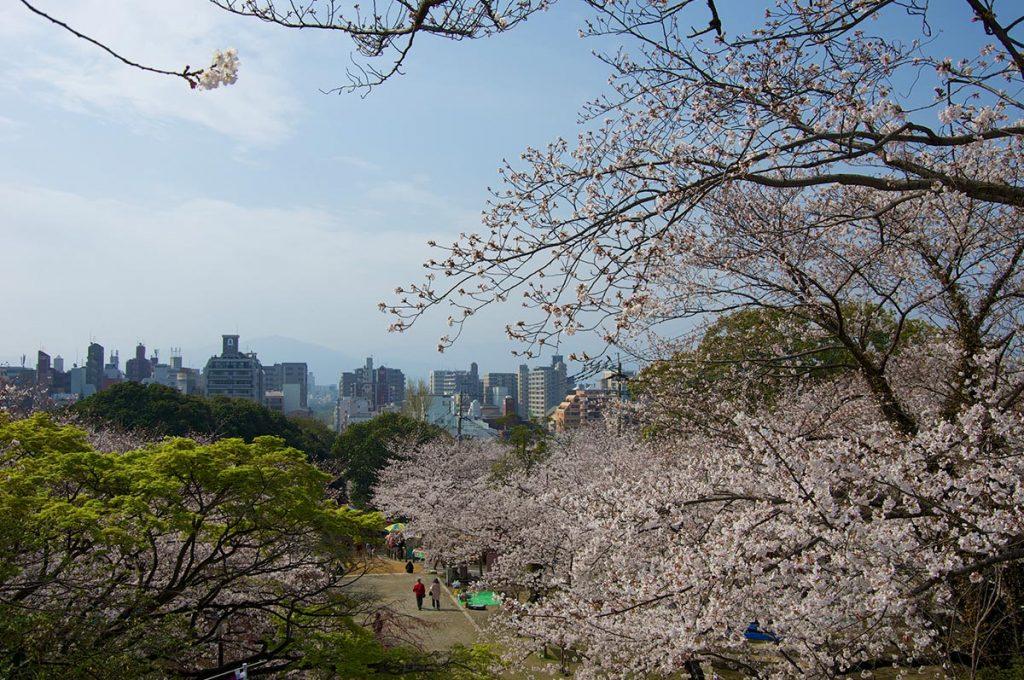 Cherry Blossom Festival Japan Fukuoka