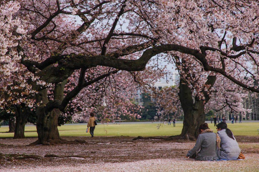 Cherry Blossom Festival Japan Hiroshima