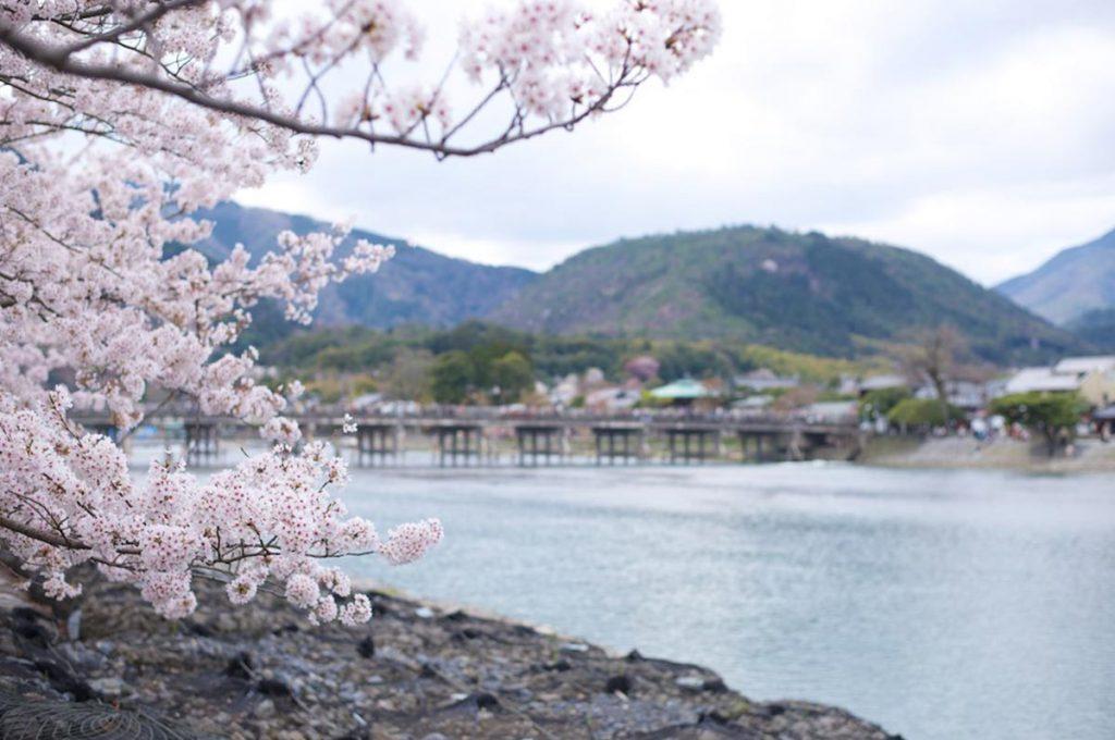 Cherry Blossom Festival Japan Kyoto