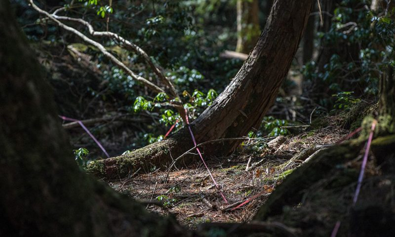Haunted Forest in Japan Strings