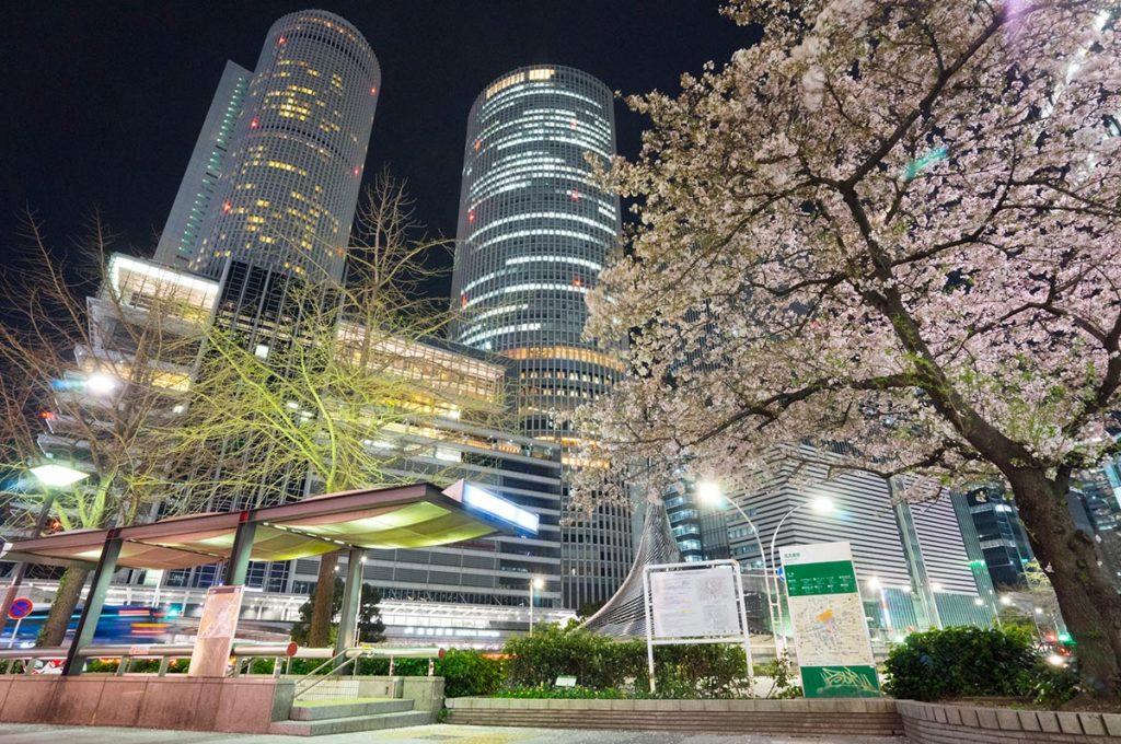 Cherry Blossom Festival Japan Nagoya