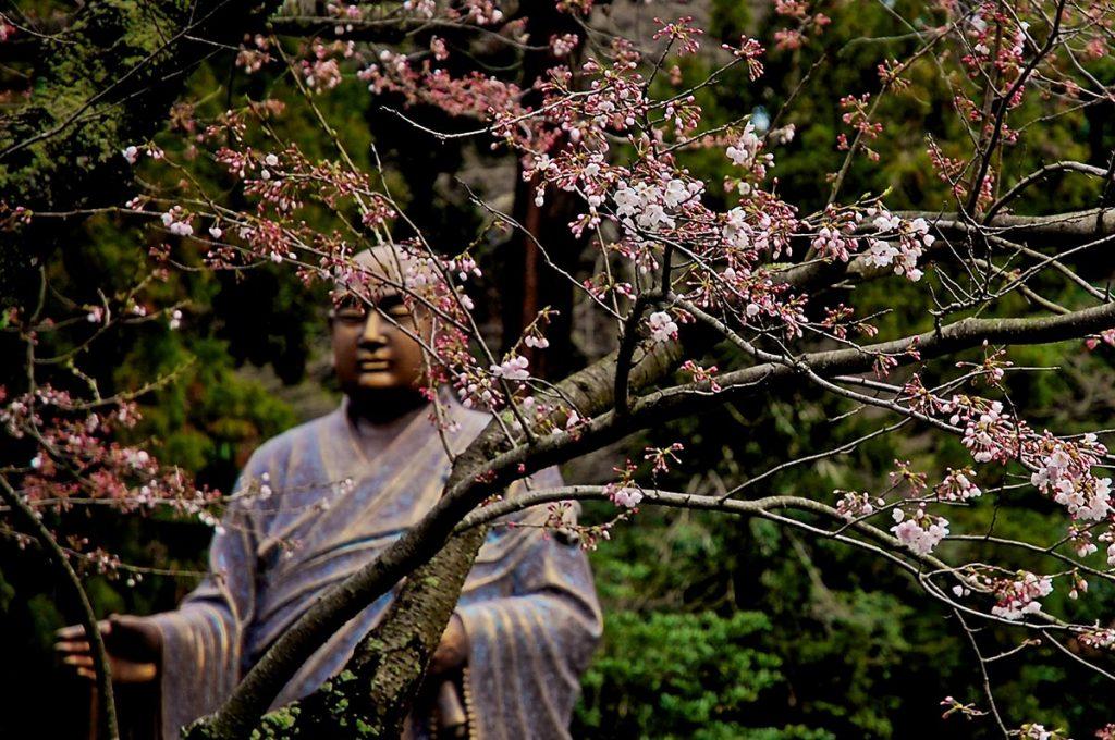 Cherry Blossom Festival Japan Kamakura