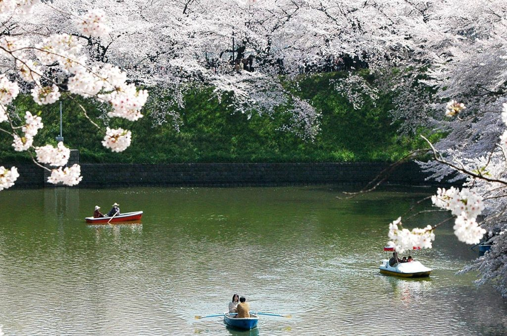 Cherry Blossom Festival Japan Lake