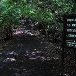 Haunted Forest in Japan Sign