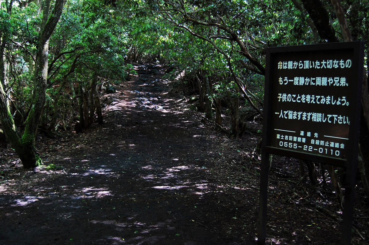 Welcome to Aokigahara – The Scary Haunted Forest in Japan