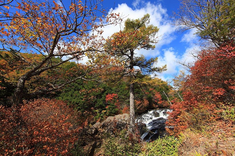 Nikko Japan Trees