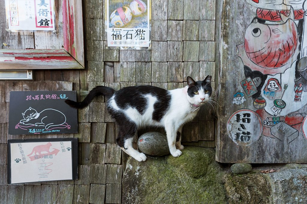 Onomichi Japan Neko no Hosomichi