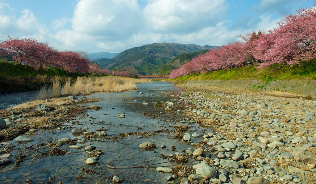 Day Trip Tokyo Kawazu