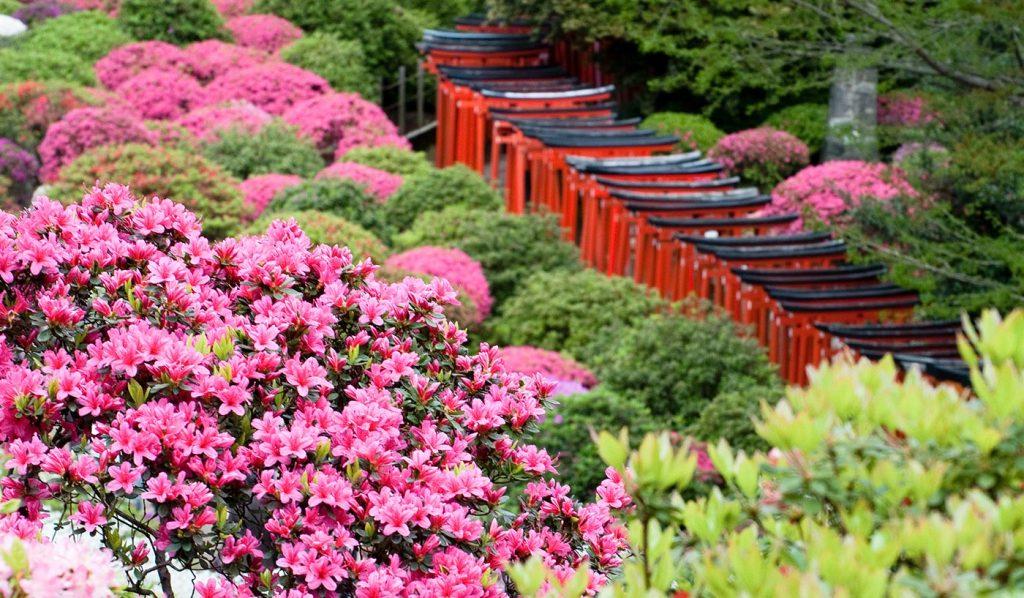 Yanesen Tokyo flower Torii