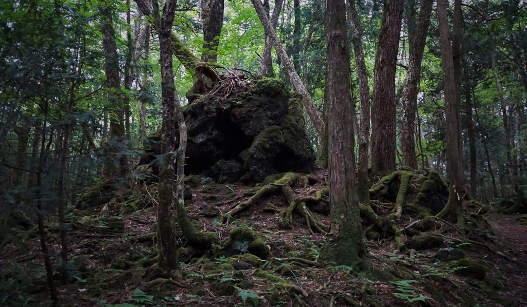 Dark Tourism Japan Aokigahara