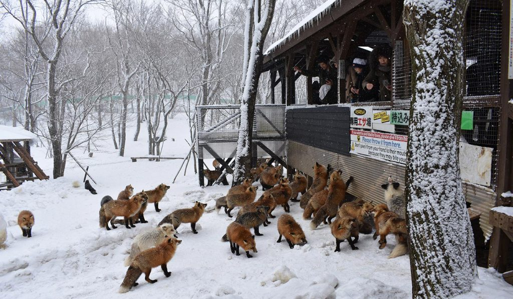 Places to visit in Japan Zao Fox Village