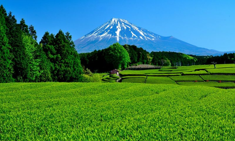 Things to do in Shizuoka Tea Fields