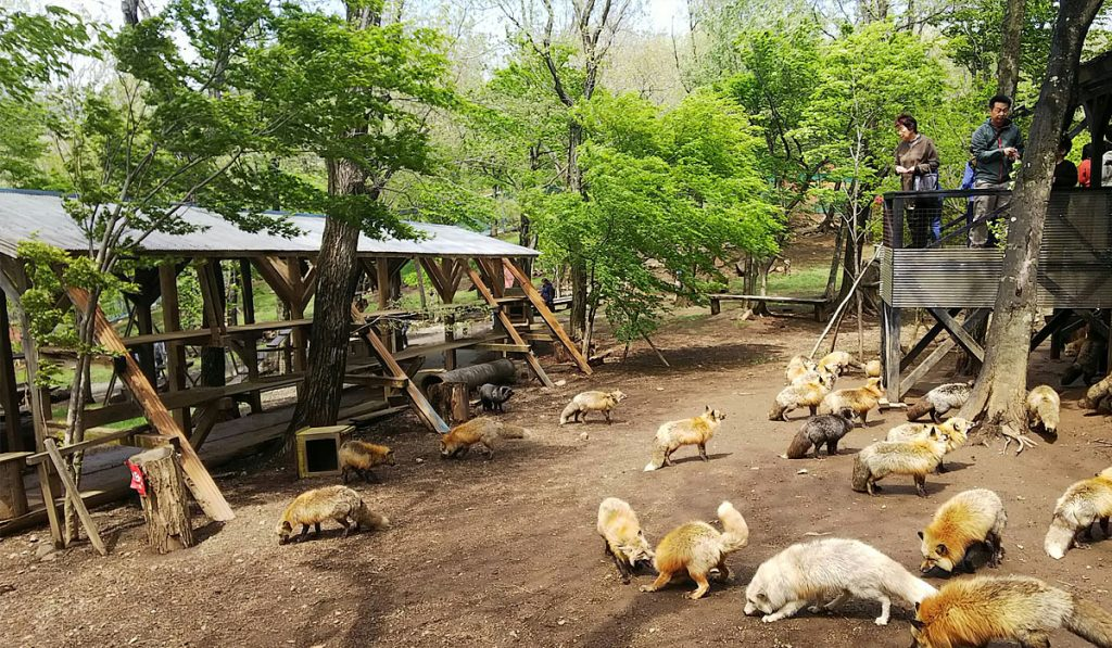 Animal Care and Other Attractions
