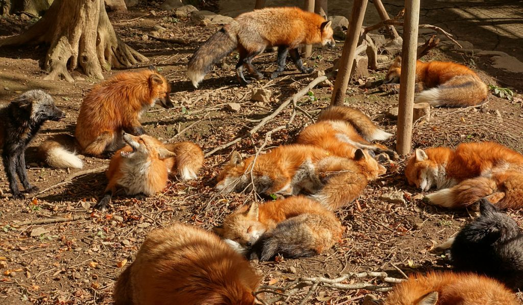 What is Zao Fox Village