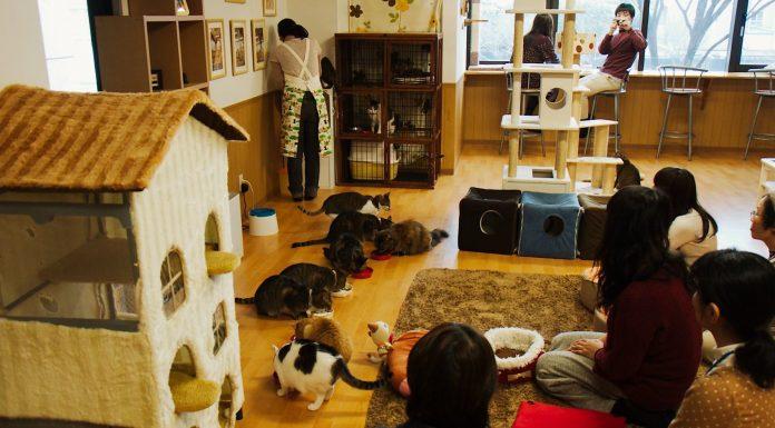 animal cafe tokyo