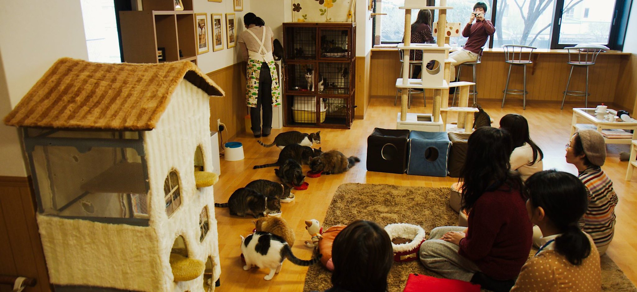 Best 9 Animal Cafes in Tokyo