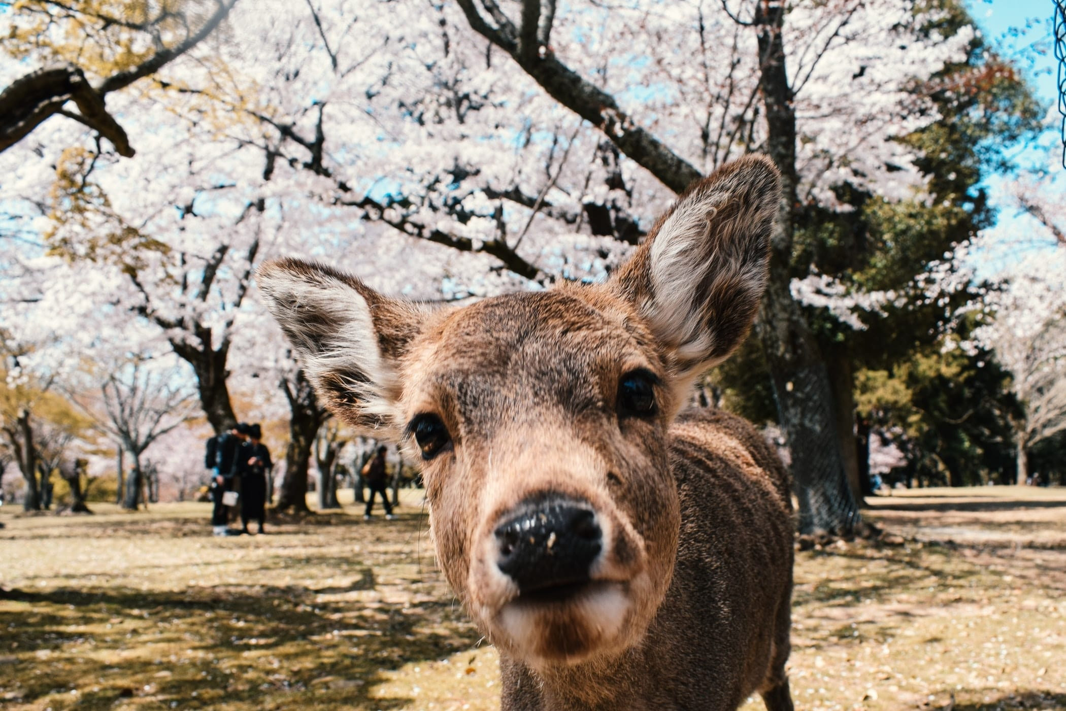 top things to do in nara