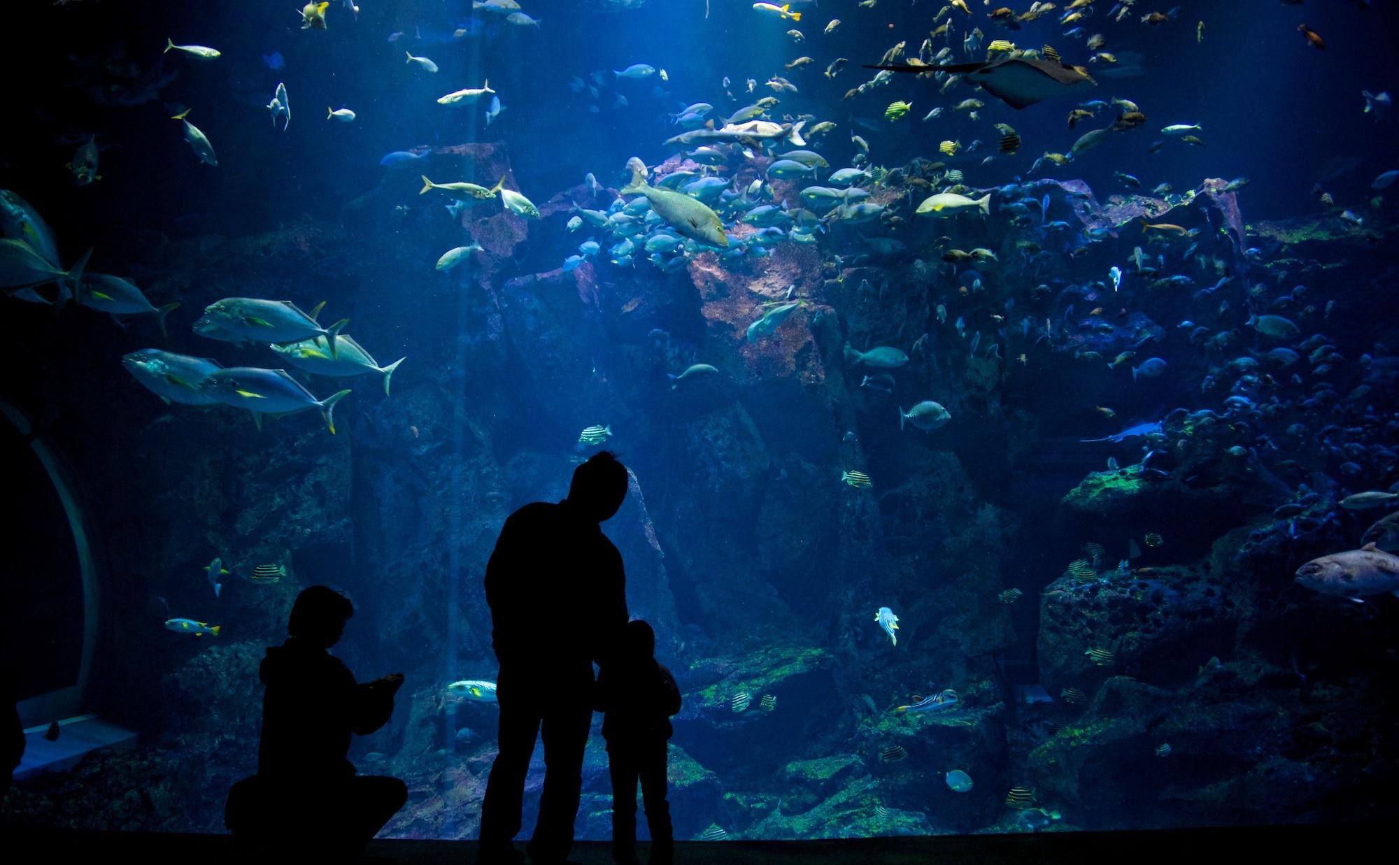 Oga aquarium