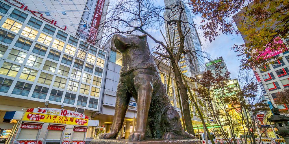 hachiko dog japan