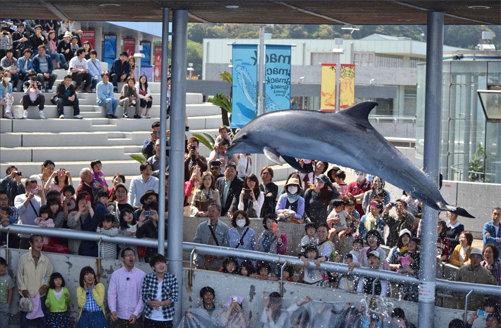 Umitamago Aquarium