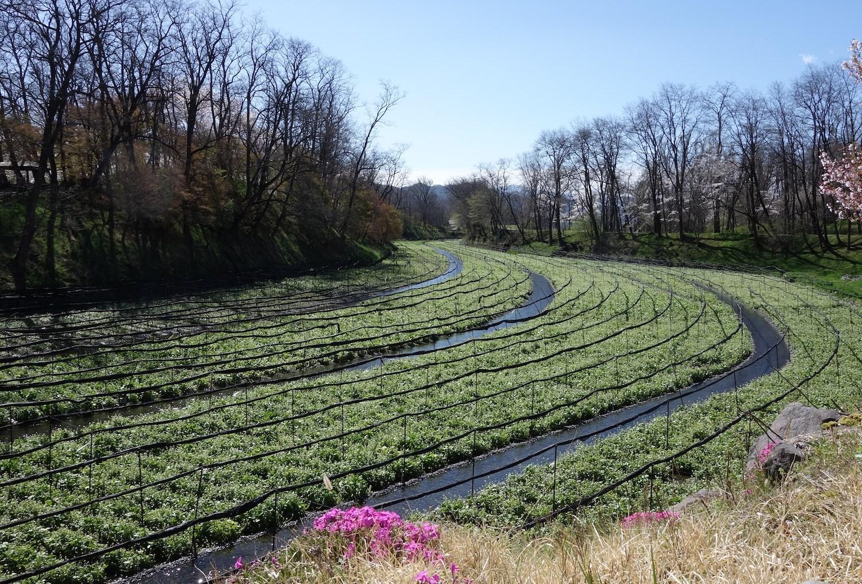 Matsumoto Travel Guide: 11 Things To Do in Matsumoto City
