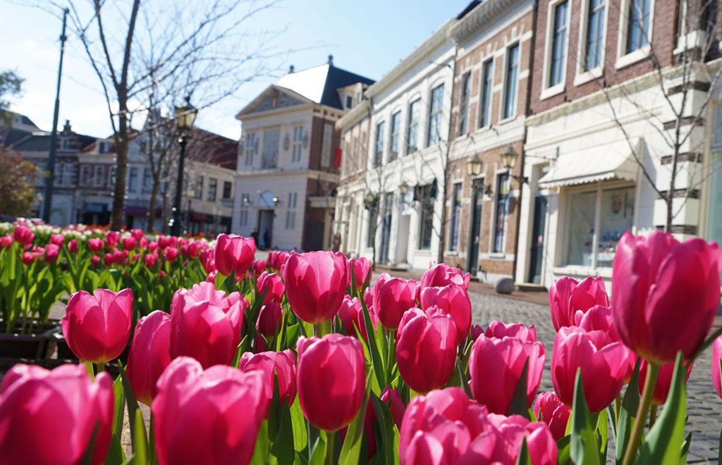 Huis Ten Bosch Tulips