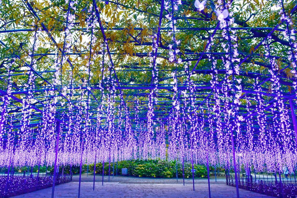 Ashikaga Flower Park, Tochigi, Japan