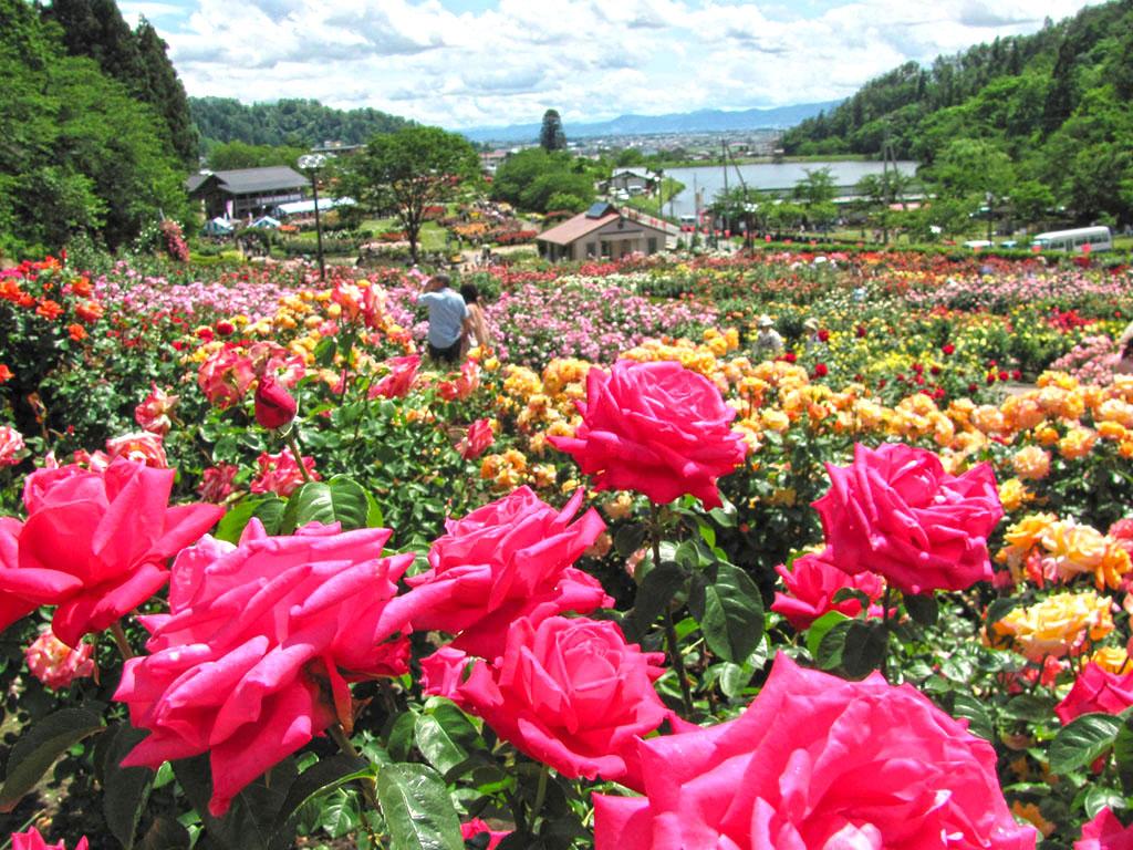 Higashizawa Rose Park