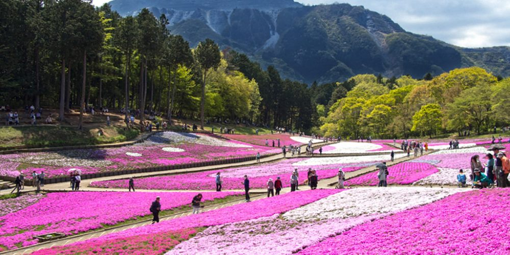 Top Flower Parks Not to Miss in Japan