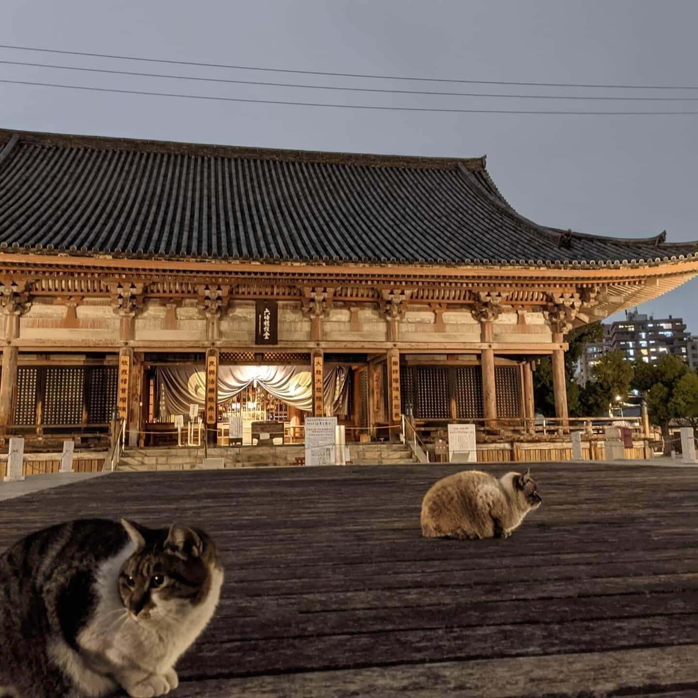 Shitennoji Temple osaka